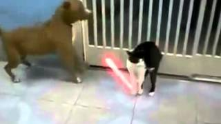 Funny Video Cat versus dog - laser sword