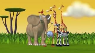 Phim hoạt hình Động vật hài hước - Hoạt Hình TV