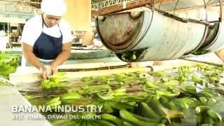 Agricultural Industry in the Municipality of Sto. Tomas, Davao del Norte