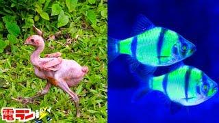 【閲覧注意】遺伝子操作で誕生した衝撃の生物8選