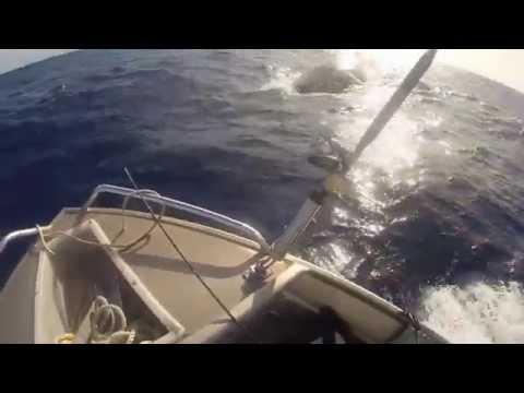 Whales in Wallis, rencontre magique...