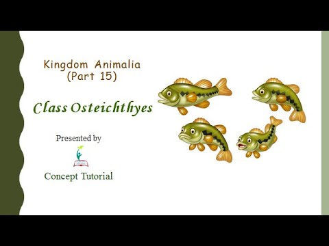 Osteichthyes (Bony Fishes) | Animal Kingdom (Part 15) | Biology Class 11