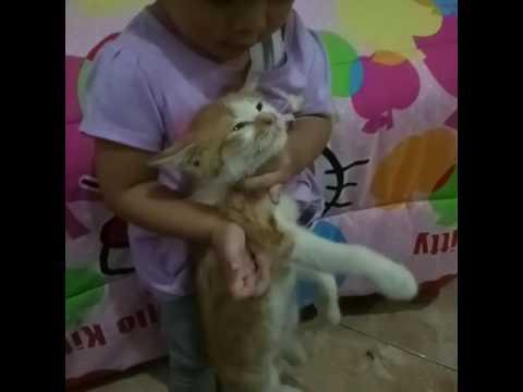 Baby vs cat