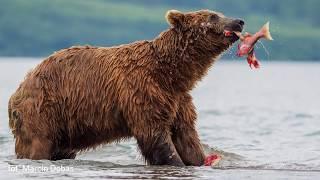 Jak fotografować dzikie zwierzęta? Opowiada Marcin Dobas
