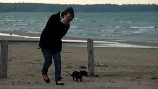 Jaimee The Dachshund Goes To The Beach