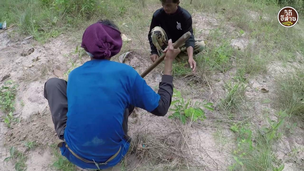 ชีวิตชาวบ้านกับเศรษฐกิจพอเพียง,หาของกินกลางป่า เก็บของป่ากับทีมงานพรานวิถีอีสาน