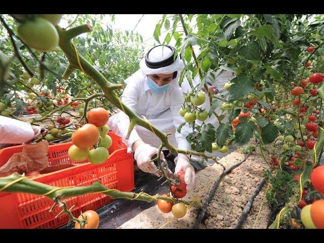 Khayr Qatarna - First Harvest