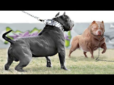 15 Abnormally Strong Dogs In The World