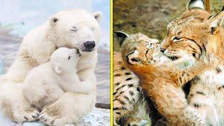 5 Милых Детёнышей Самых Опасных Хищников в Мире!!