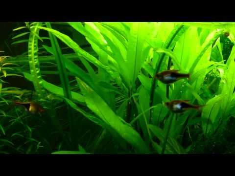 Fluval Studio 900 planted aquarium