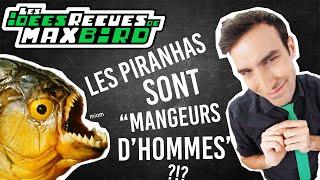IDÉE REÇUE #38 : Les piranhas sont-ils des mangeurs d'hommes ?