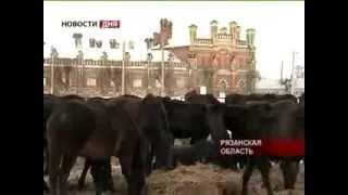 Сюжет о русской верховой породе лошадей