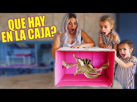 QUE HAY EN LA CAJA 📦😱 ANIMAL EXOTICO 🐸 Itarte Vlogs