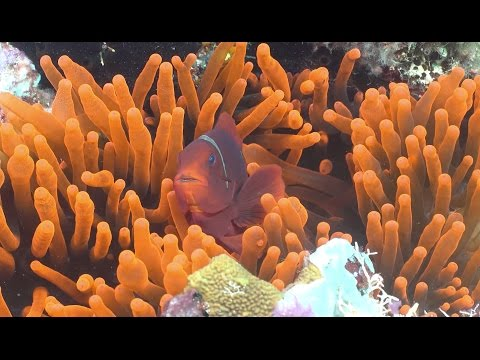 Exploring Ecosystems: Coral Reef Symbiosis | California Academy of Sciences