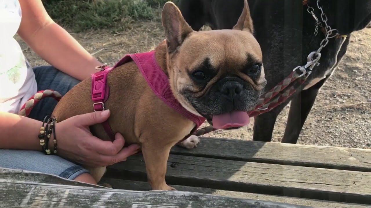 Tolle Bulldog Sicherheit Com Zeitgenössisch - Schaltplan Serie ...