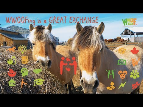 2nd Place Winner - WWOOF Is A Great Exchange - Work Abroad On An Organic Farm