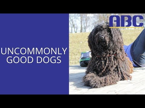 Unusual Dog Breeds | Animal Behavior College