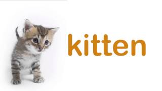 Baby Flashcards: PET ANIMALS. Learning and stimulation for babies.