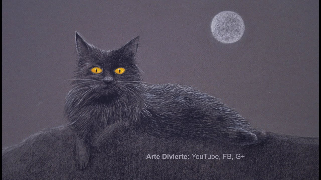 Black Cat In The Night