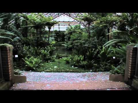 Hail Storm Damage at the Garfield Park Conservatory 2011
