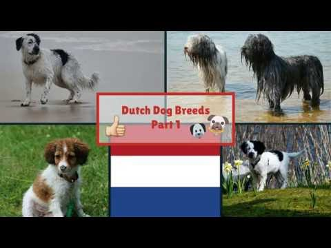 Dutch Dog Breeds Part 1