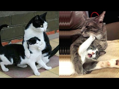 Funniest Animals – Best Of The 2020 Funny Animal Videos #2