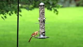 Video Perky-Pet® 2-in-1 Wild Bird Feeder download MP3, 3GP, MP4, WEBM, AVI, FLV Juli 2018