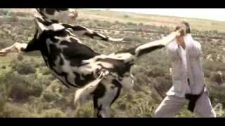 прикол про корову ржач полный