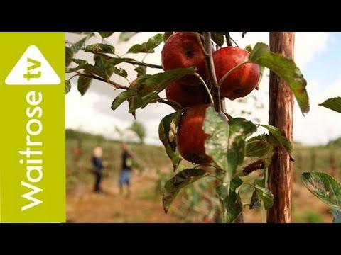A Taste Of Leckford Estate   Apples   Waitrose