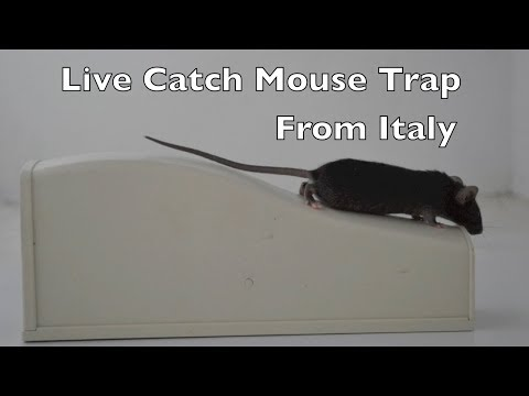 A Live Catch Mouse Trap from I italy