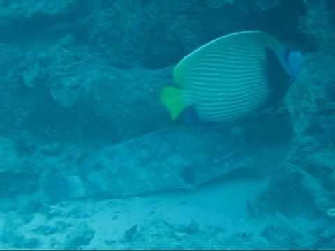 xav-photo.blogspot.com, kuredu, maldives, plongée, diving, underwater, swimming, reef, underwater diving, scuba, travel log