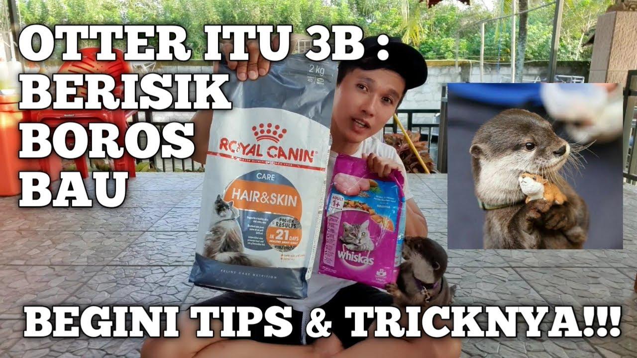 Otter Itu 3 B Berisik Boros Bau Tips And Trick Ngatasin 3b Youtube