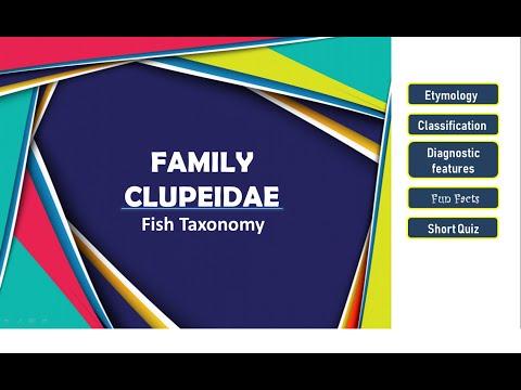 Fish Taxonomy - Clupeidae