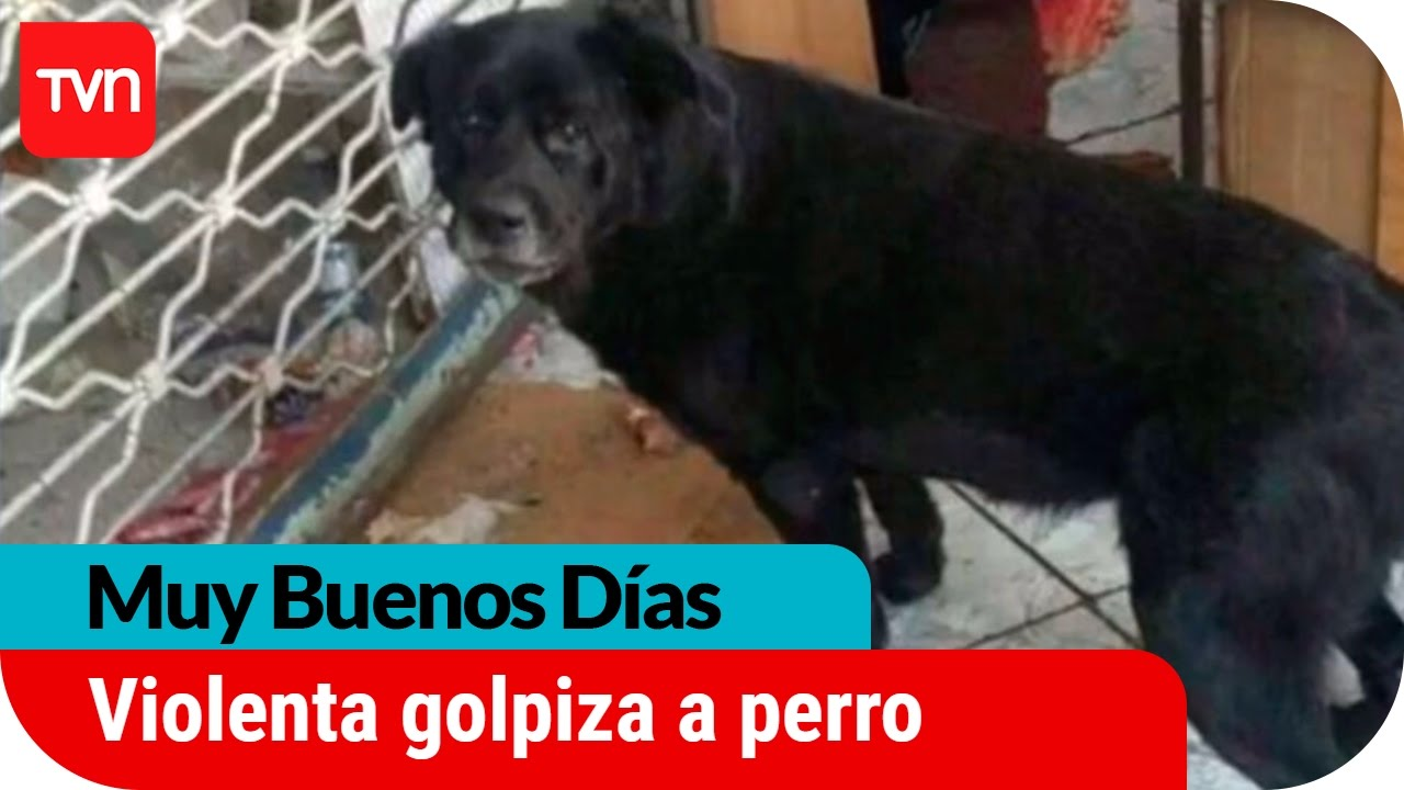 Muy buenos días | Indignación por dura golpiza a perro Cholito