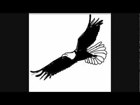 Vögel Zeichnungen : Adler – Online Zeichnen Lernen