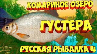 русская рыбалка 4 Густера озеро Комариное рр4 фарм Алексей Майоров russian fishing 4