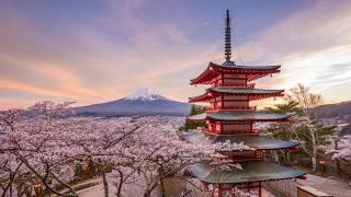 Spring in Japan Stock Footage   Shutterstock