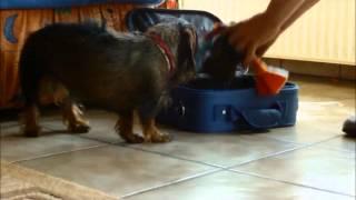 Kein Urlaub Ohne Livvy - Süßes Hunde-urlaubs-video