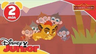 La Guardia del León: Canciones Infantiles - Cinco monitos | Disney Junior Oficial