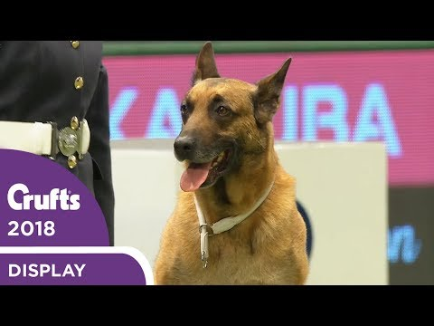 RAF Display Team Perform at Crufts 2018