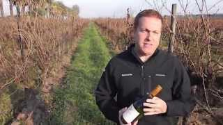Winemaker Emilio Contreras On Natura Wine's Vegan Chilean Chardonnay
