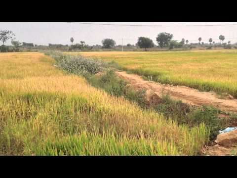 50 Acers of Agriculture Land for Sale - YouTube