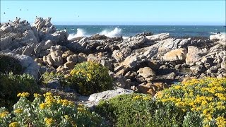 1 hour relaxing nature scene -  ocean bird symphony - HD 1080P
