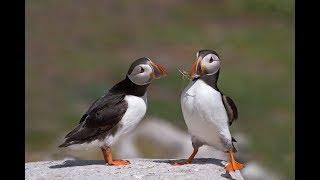 Экзотические красавчики: ТОП-5 самых необычных птиц