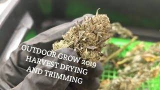 Outdoor Cannabis Grow best tips for  Harvesting, drying and trimming your buds