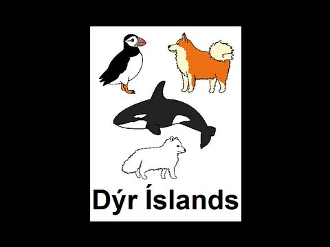 Icelandic Lesson #46: Animals of Iceland - Singular and Plural, Pronunciation
