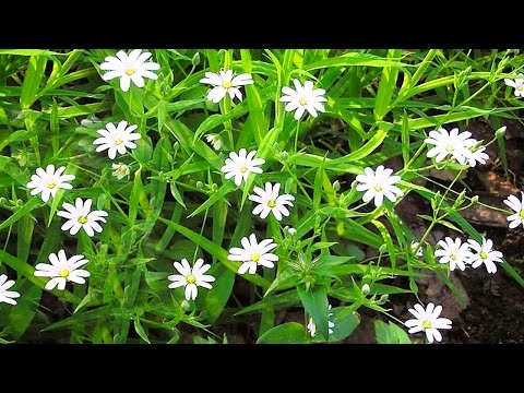 Какие травы при простуде помогут детям и взрослым