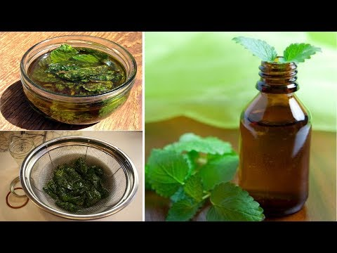 How to make Peppermint Oil at Home and Benefits || Very Easy