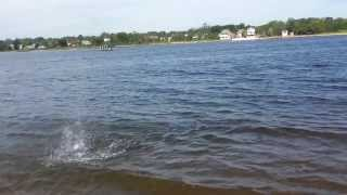 Catching a Cownose Ray off Beach in Great Kills Harbor