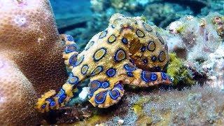 Самые опасные морские животные!!! ТОП 7!